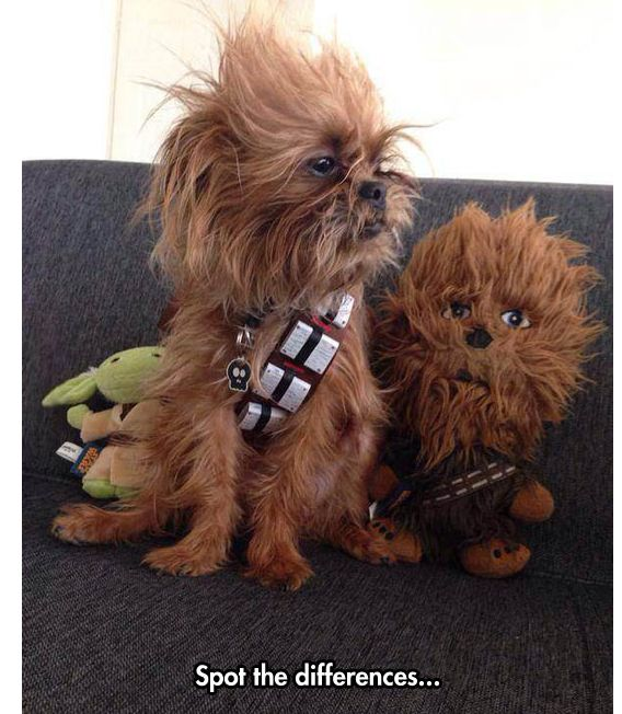 Can You? << Aw,! My aunt has two Brussel Griffons who look like ewoks, so we try and dress them up all the time. (They don't appreciate the gesture)