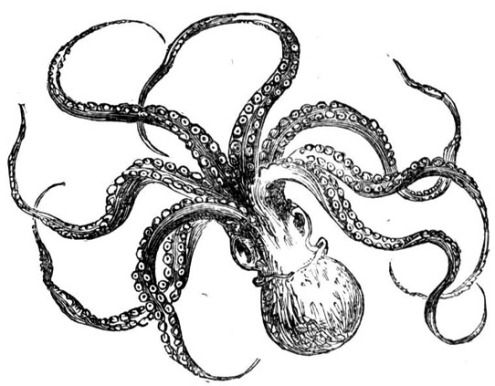 17 best images about my love of the octopus on pinterest for Simple octopus drawing