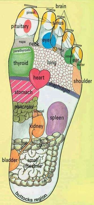 Acupressure chart for the foot-check out the sinus point!