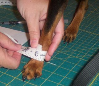 How to measure a Dog for Costumes, Coats, and Clothes