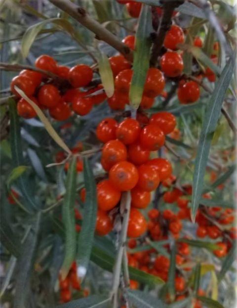 Bylinkové marmelády | Bylinky pro radost - Part 3