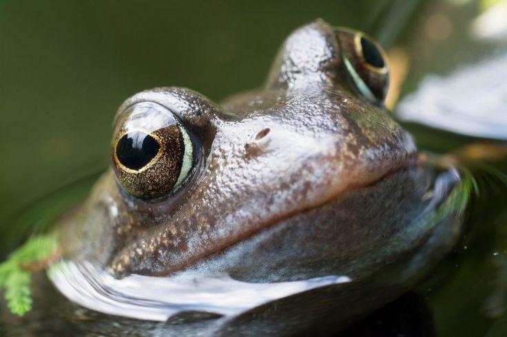 The Patient Mr. Frog