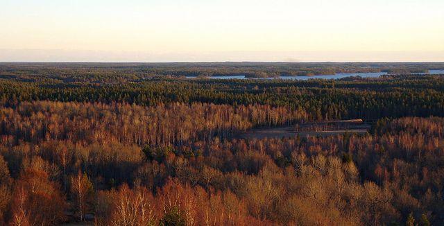 Skog, skog, skog, sjöar och 36 km till Kalmar Sund som ligger i horisontlinjen