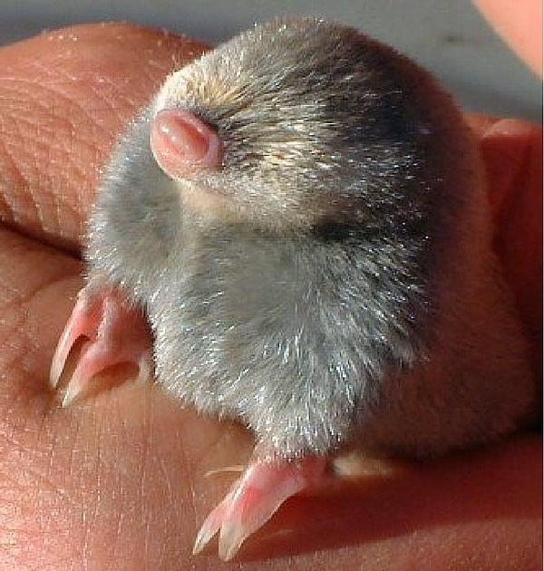27 Tiny Animals That Will Warm Your Heart Today
