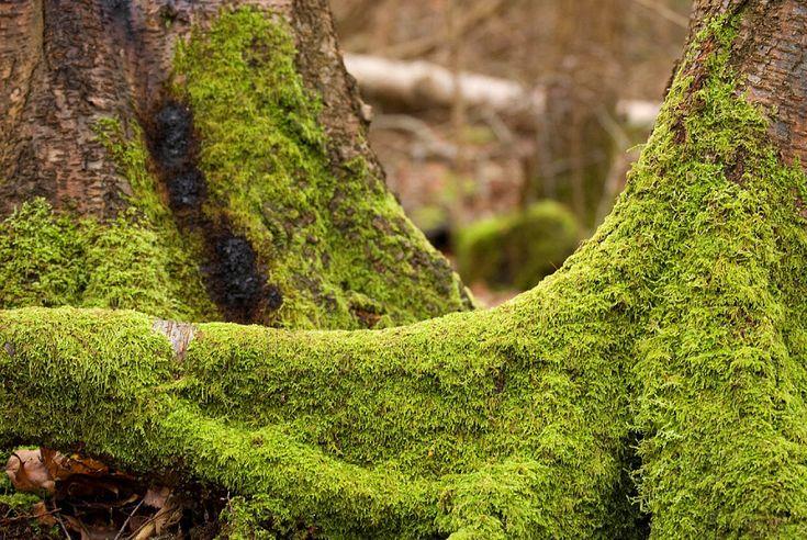 Información sobre las plantas que no necesitan suelo, ¡qué curiosas!