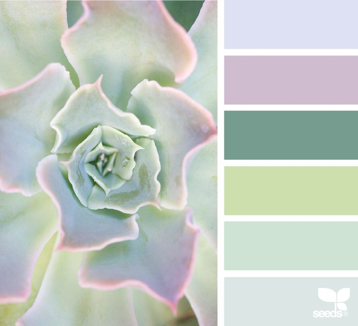 Succulent Hues - https://www.design-seeds.com/in-nature/succulents/succulent-hues-21