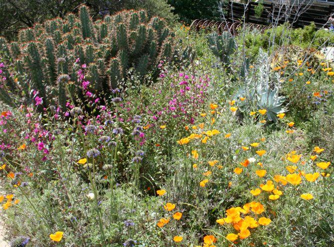 Top 25 Best California Native Garden Ideas On Pinterest California Native Plants California