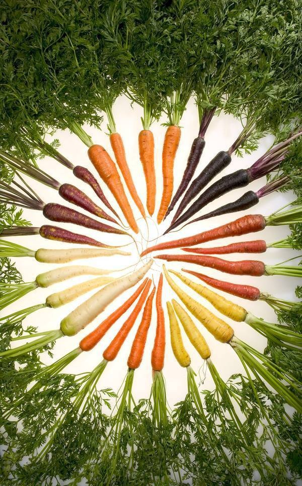 Carrots of Many Colors: Carrots are only orange because they were bred that way in the 17th and 18th century as a tribute to the Dutch royal house of Orange.