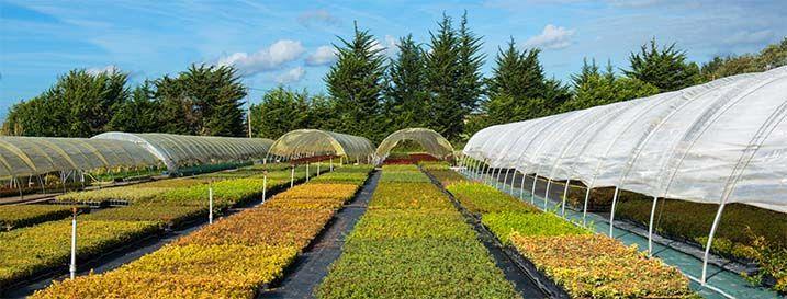 Leaderplant vente de plantes arbres arbustes bambous for Vente plantes arbustes