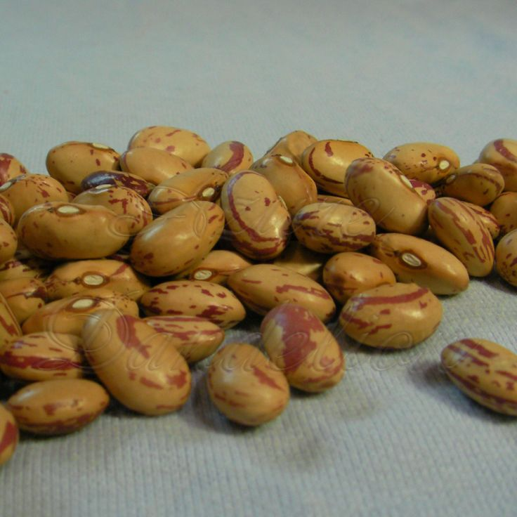 17 Best Images About Heirloom Beans On Pinterest Navy 400 x 300