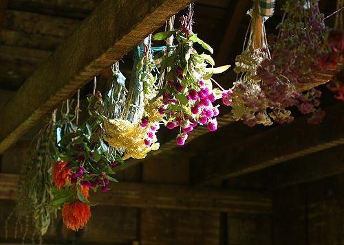 Целебные травы для энергетики вашего дома, Сообщество хорошего настроения
