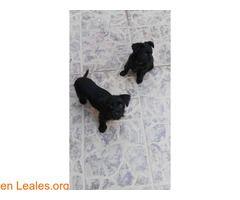 Cachorros en adopcion  #Adopción #adopta #adoptanocompres #adoptar #LealesOrg  Contacto y info: Pulsar la foto o: https://leales.org/animales-en-adopcion/perros-en-adopcion/cachorros-en-adopcion_i2729 ℹ  Hola necesitamos adopción para estas dos hembritas rescatadas de un descampado con su mamá y sus dos hermanossólo quedan ellas dos hazle un huequito en tu vida sino puedes adoptar difunde gracias Contacto Pepa   Acerca de esta publicación:   Esta publicación NO ha sido creada por Leales.org…