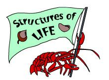 Structures of Life for Gr 3