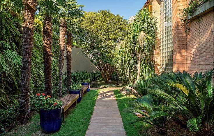 O caminho que leva à porta principal é ladeado por palmeiras moinho-de-vento com jardim vertical de samambaias e cicas com patas-de-elefante. Há ainda jabuticabeira e aspiditras ao fundo, rente ao muro. Um sonho verde!
