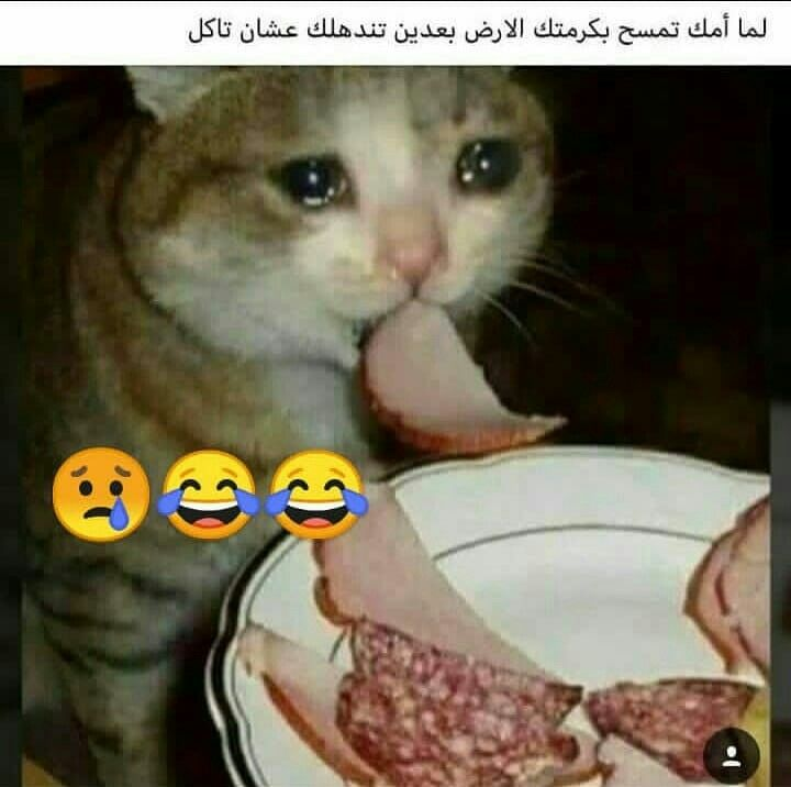 كلو الا الاكل Funny Picture Jokes Anime Funny Funny Pictures