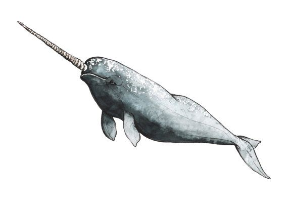 Giclée Print Illustration of Narwhal A5 A4 & от Loreillustration