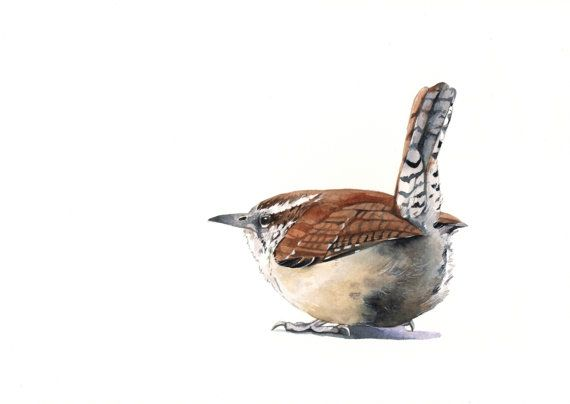 Wren Painting bird Print of watercolor painting A4 by Splodgepodge, $20.00
