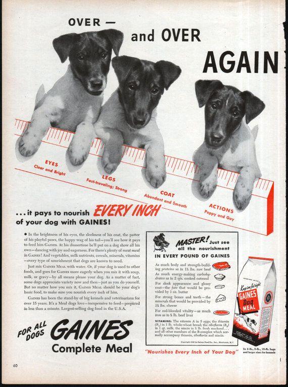 FOX TERRIER Gaines chien nourriture annonce chiots des par RoxyRani