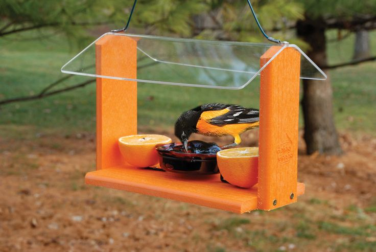 A recycled oriole feeder is good for both the earth and