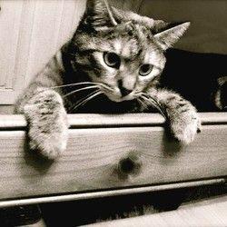 Beaucoup de gens, et ce même parmi les propriétaires de chats, pensent à tort que cet animal ne peut être dressé.Soyons clair : être indépendant et têtu, c'est dans le caractère du chat.Jamais il ne sera aussi doué qu'un chien ...