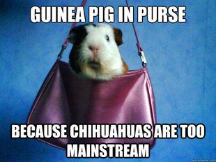 Hipster guinea pig | Pictures to make me happy | Pinterest ...