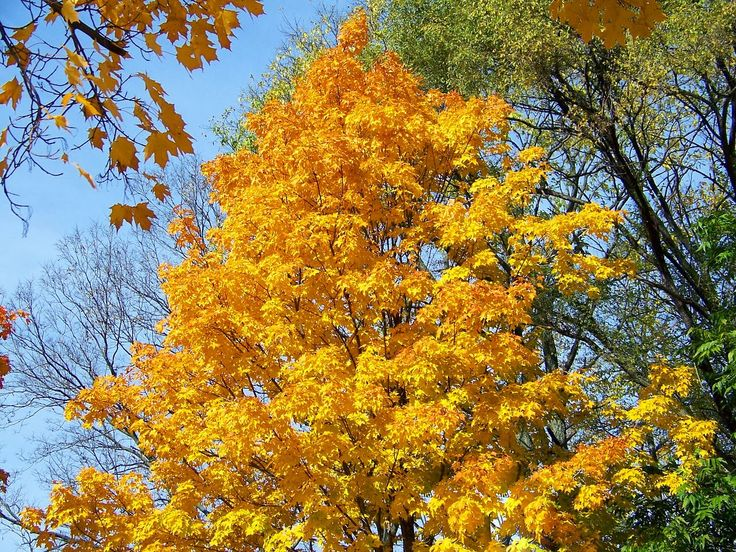 Maple tree. Fall. And a great post. Read more