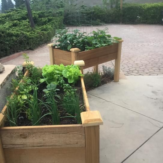 25+ Unique Elevated Garden Beds Ideas On Pinterest | Raised Bed Diy, Raised  Garden Planters And Above Ground Garden