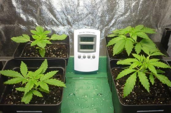 Primeros pasos en el cultivo interior de marihuana | Grow Shop