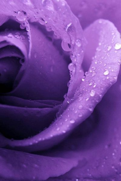 Purple for wisdom a reminder not to slander or talk of others with mal intent.