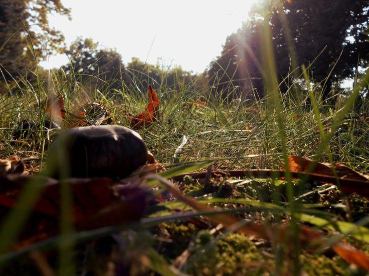Ősz. Autumn.