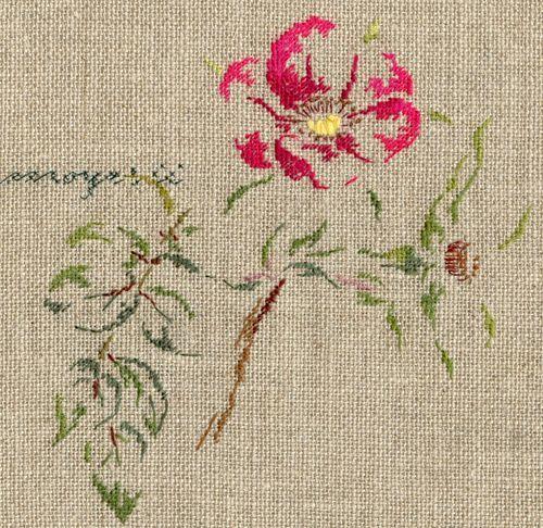 Par brodeuse Marie-Thérèse Saint-Aubin (embroidery works by Marie-Thérèse Saint-Aubin)   http://www.archive-host2.com/membres/images/1336321151/fleurs/roses/Rosa_moeysii/moyesii-d.jpg