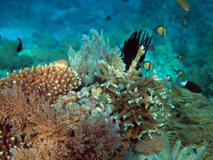 Underwater takabonerate #takabonerate #indonesia #sulawesi