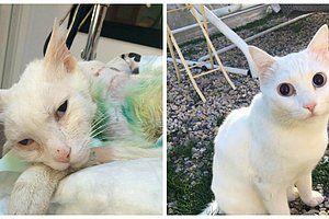 """Sevda Titiz Başata ve Ahmet Başata çiftiyle yaşayan kedi """"Muro"""", bir yıl önce mahalledeki saldırgan tarafından kürekle dövülerek işkenceye maruz kaldı. Savcılık, kamera kayıtları olmasına rağmen delil yetersizliği nedeniyle """"Kovuşturmaya yer yok"""" kararı verdi. Hayvanseverlerin karara yönelik...   http://havari.co/kedi-muro-icin-adalet-bekleniyor-kurekle-iskenceye-kovusturmaya-yer-yok-karari/"""