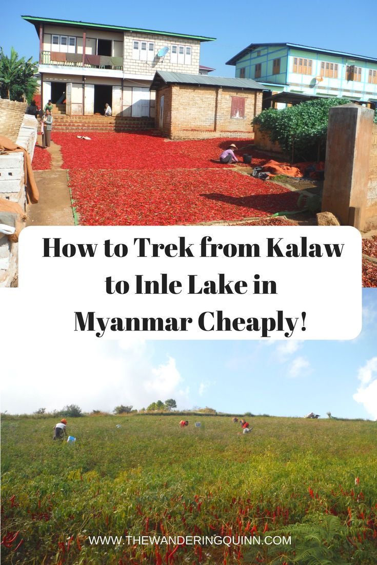 How to Trek from Kalaw to Inle Lake in Myanmar Cheaply!  The 3 day, 2 night trek from the small town of Kalaw to Inle Lake in Myanmar is pretty common. It's a great trek in beautiful countryside and cheap, this is how I did it and who I booked it with as I would definitely recommend my guide! #myanmar #inlelake #kalaw #asia
