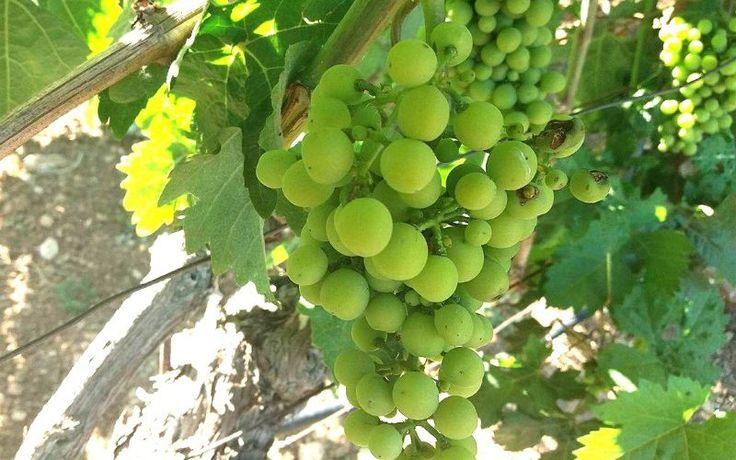 Lyrarakis Winery: The Wine Tasting Experience of Crete