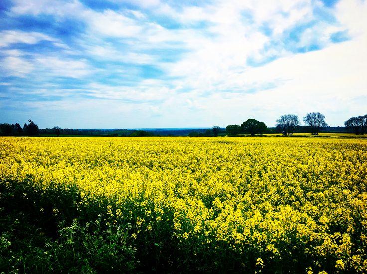 Berkshire, England #roadtrip #rapsfält #turville #turvillevillage
