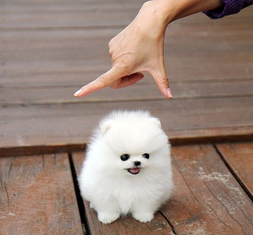 So cute, looks like a cotton ball with eyes