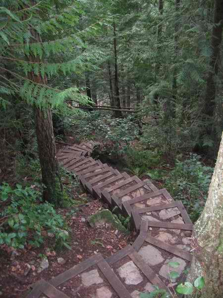 This stairway seems to just dissapear into the forest