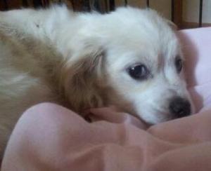 Ann Arbor Adopt Dog
