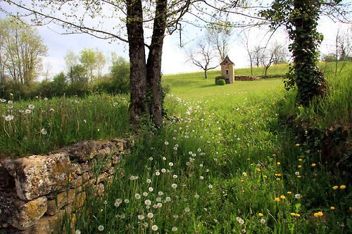 ,.,..,,: Magic Fields, Dreams Places, Green Meadow, Beautiful Places, Gardens, Le Printemp, Countryfrancegreenjpg 1024683, Wild Flowers, Fairies Tales