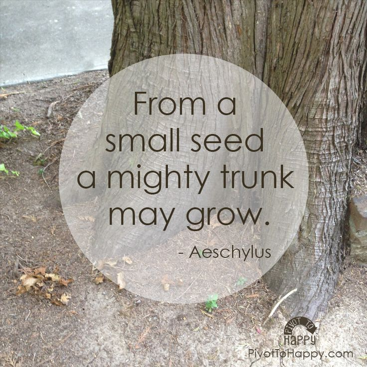 From a small seed a mighty trunk may grow. - Aeschylus #quote #strength #pivotToHappy