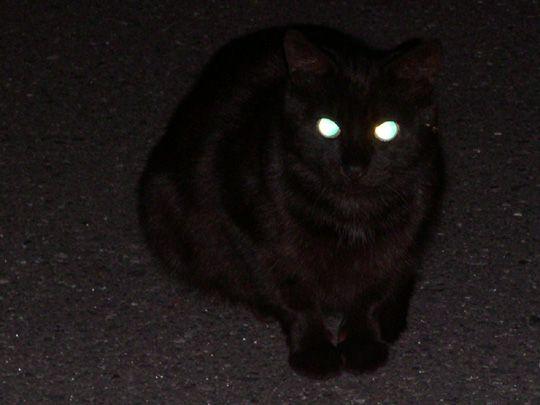 images of 黒猫 | ホットなひと息7 sasuke 夏の終りのゲスト 黒猫 夜 ...
