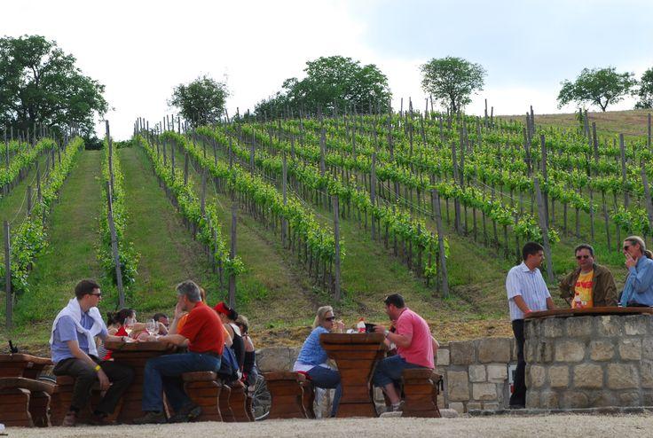 Wine tasting tour in Etyek
