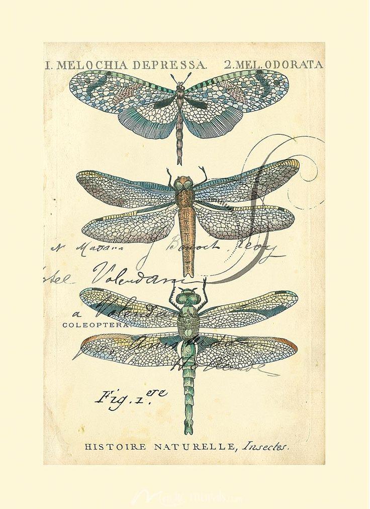 Dragonfly Ephemera I by Chariklia Zarris Via Magic Murals, LLC. [US]