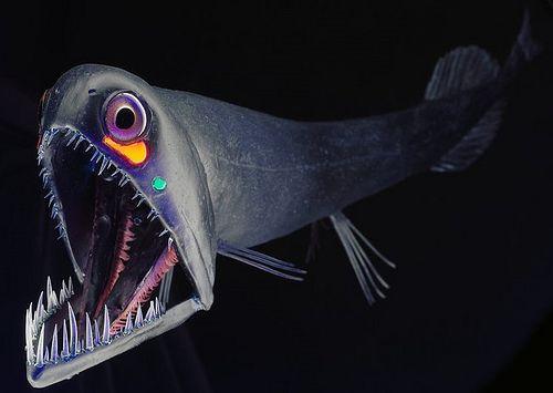 Creatures of the deep, GEO.de