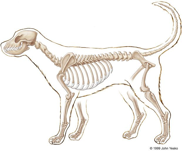 External Female Dog Anatomy Pictures