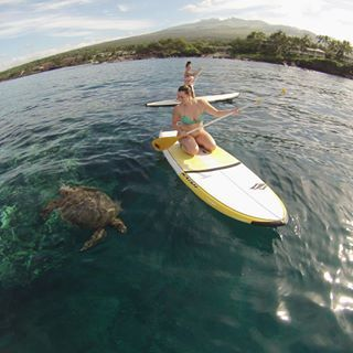 Maui Stand Up Paddle Board lessons and tours provided by Hawaiian Paddle Sports, great for touring, surfing and getting on the water!