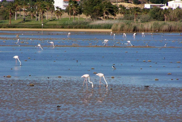 how to get to ria formosa natural park