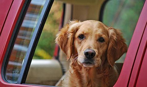tips for traveling with dogs tips for traveling