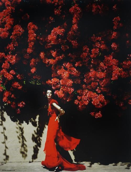 red: Mario Testino, Red, Editorial, Color, Dress, Mariotestino, Fashion Photography, Flower, Daria Werbowy